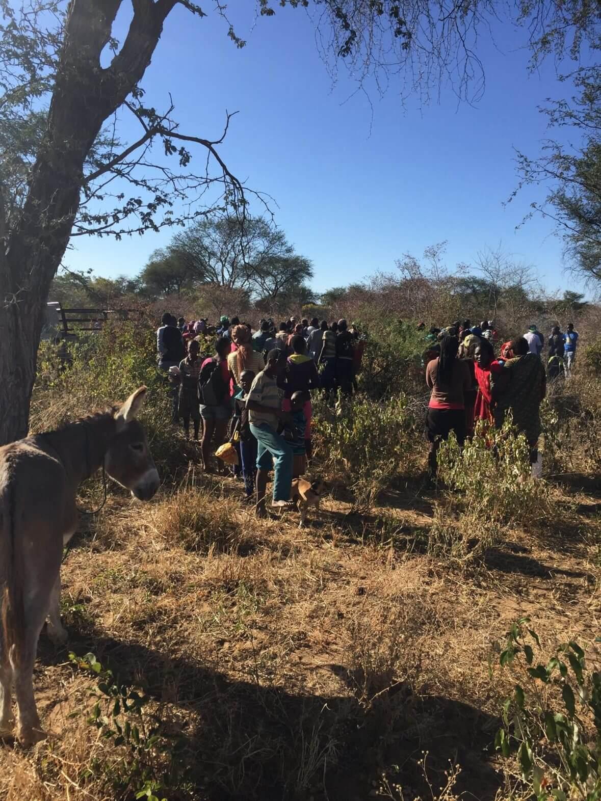 Trophy hunt elephant feeds a hungry village