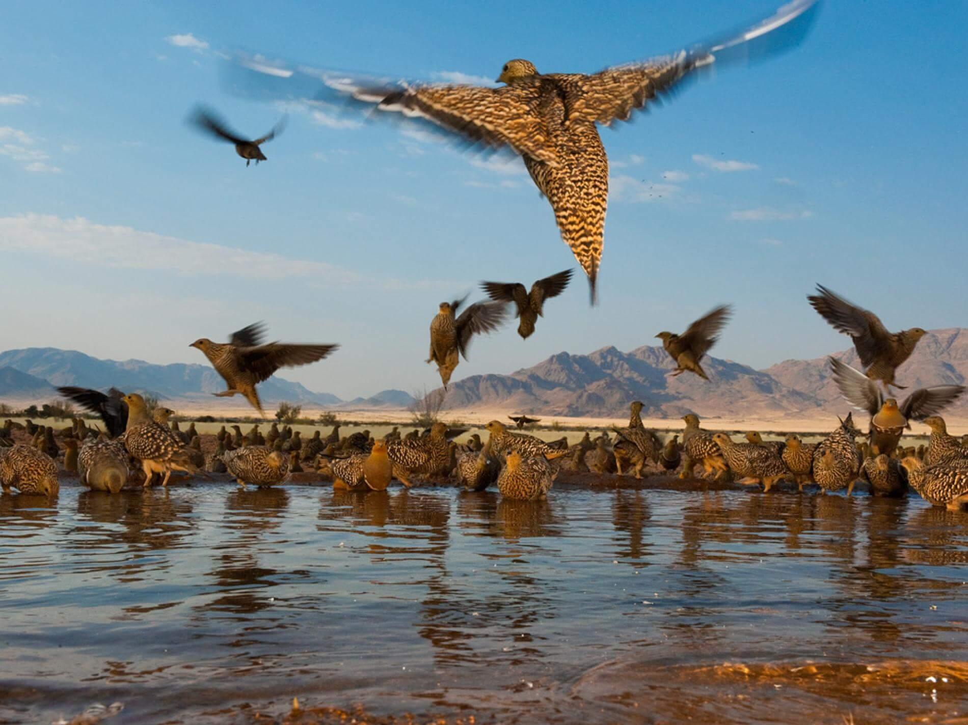 Schalk Pienaar Safaris Namibia ~ Wingshooting