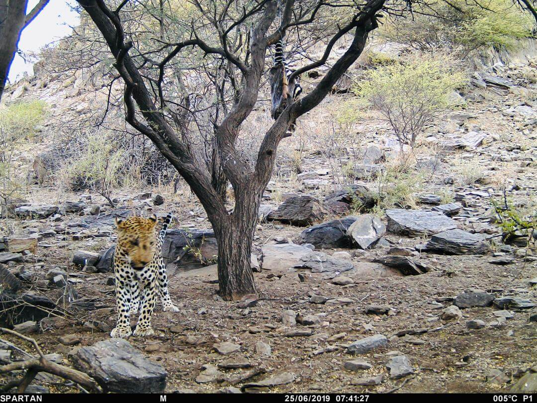 trail cam south africa