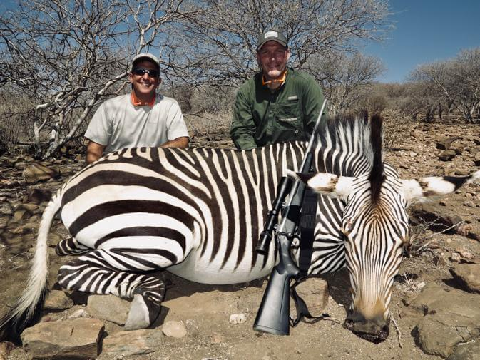 zebra hunting safari