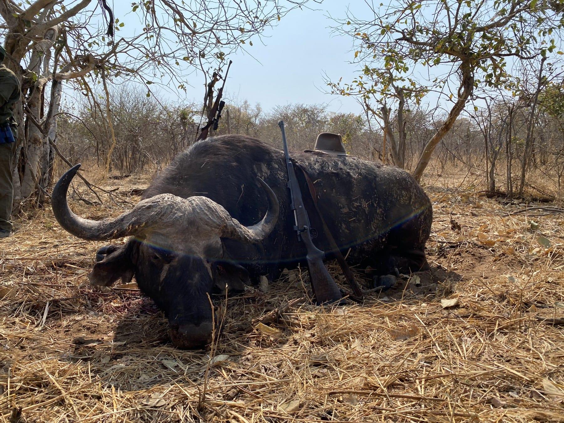 buffalo hunting namibia