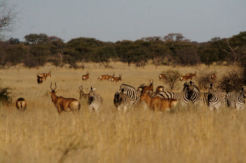 Schalk Pienaar Safaris Namibia ~ Red Hartebeest & Burchells Zebra