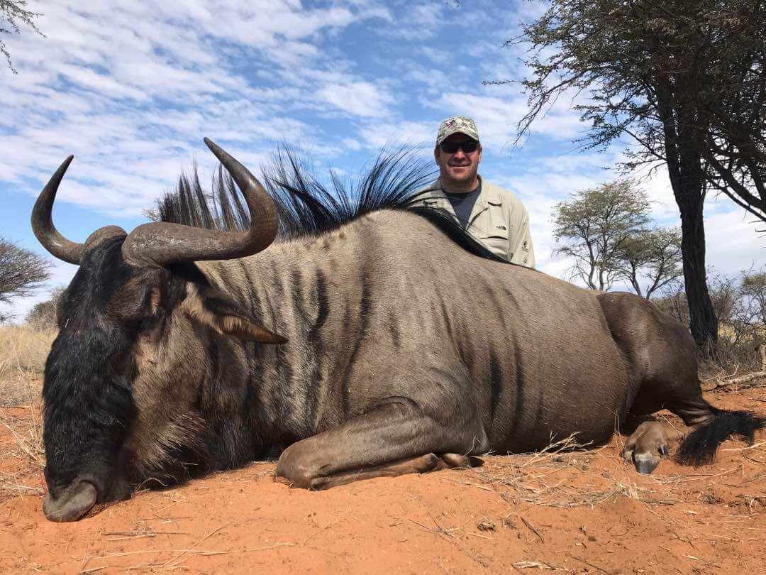 Schalk Pienaar Hunting Safaris Namibia 2018 Trophy ~ Blue Wildebeest