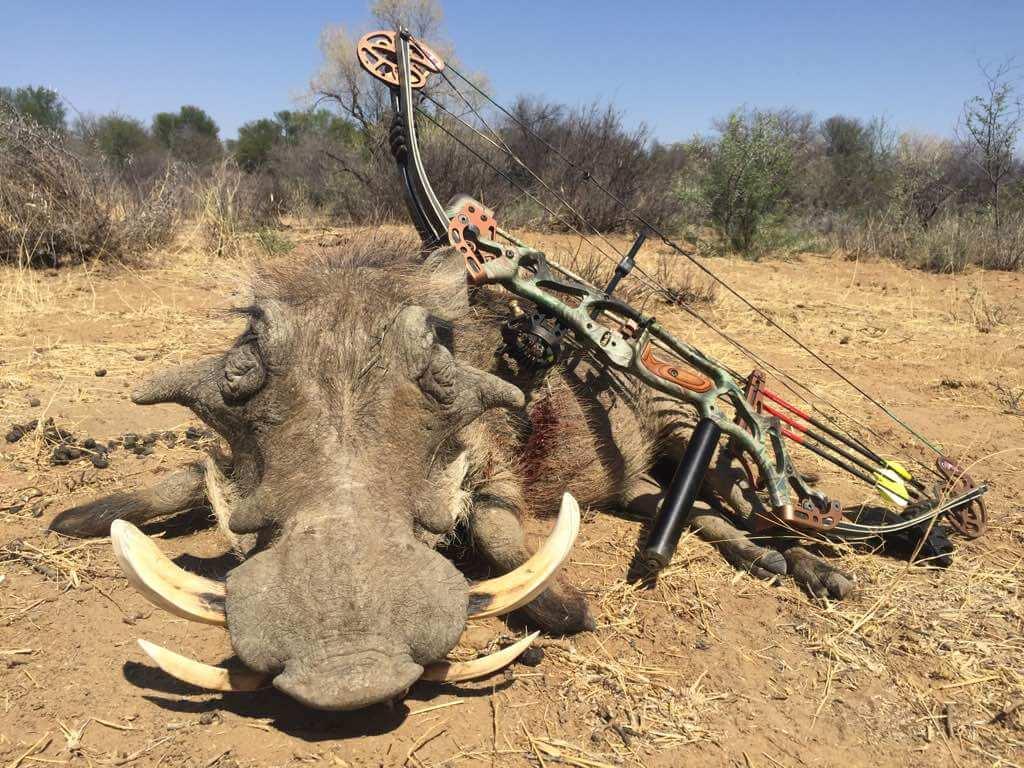 Schalk Pienaar Safaris Namibia ~ Bow hunting Warthog
