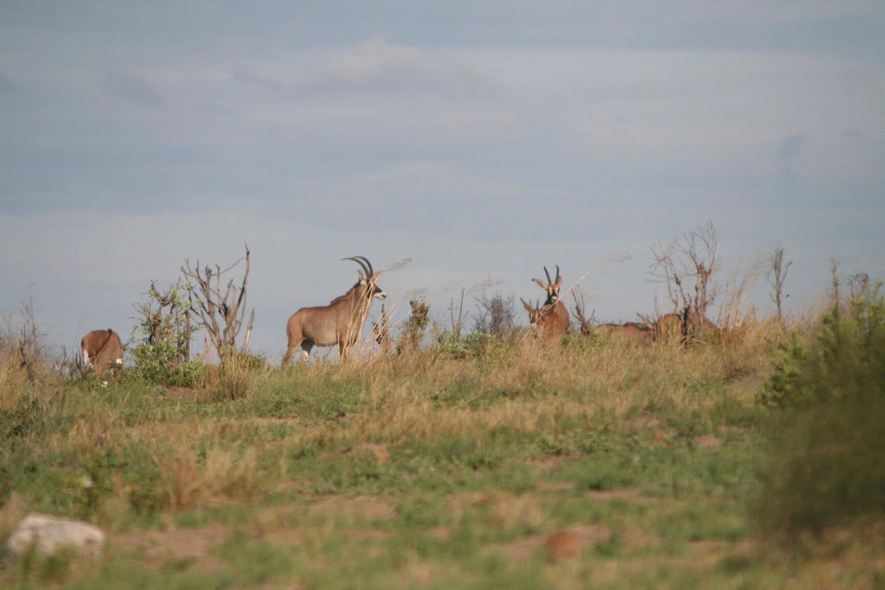 Schalk Pienaar Safaris Namibia ~ Roan Hunting
