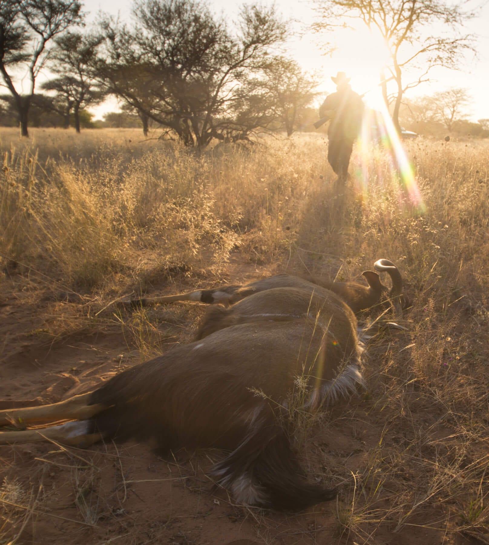 Schalk Pienaar Safaris Namibia - Wildlife Conservation