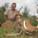 Schalk Pienaar Safaris Namibia ~ Warthog Hunting