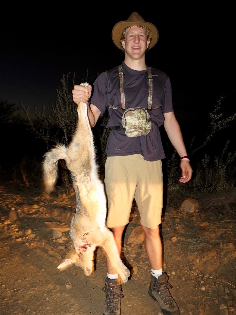 black backed jackal hunting ~ schalk pienaar safaris namibia