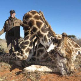 Schalk Pienaar Safaris Namibia ~ Giraffe Hunting